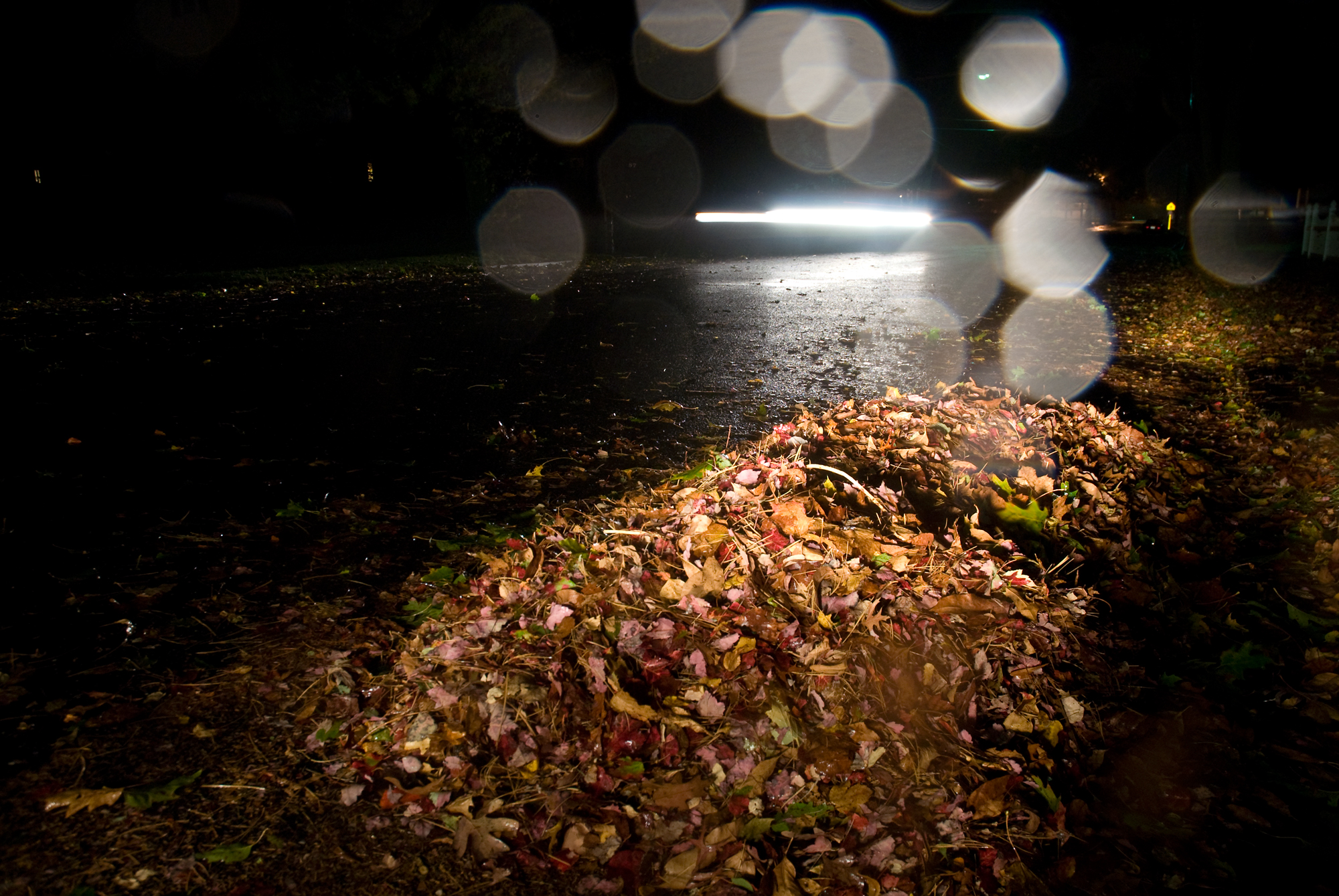 13_Leaves