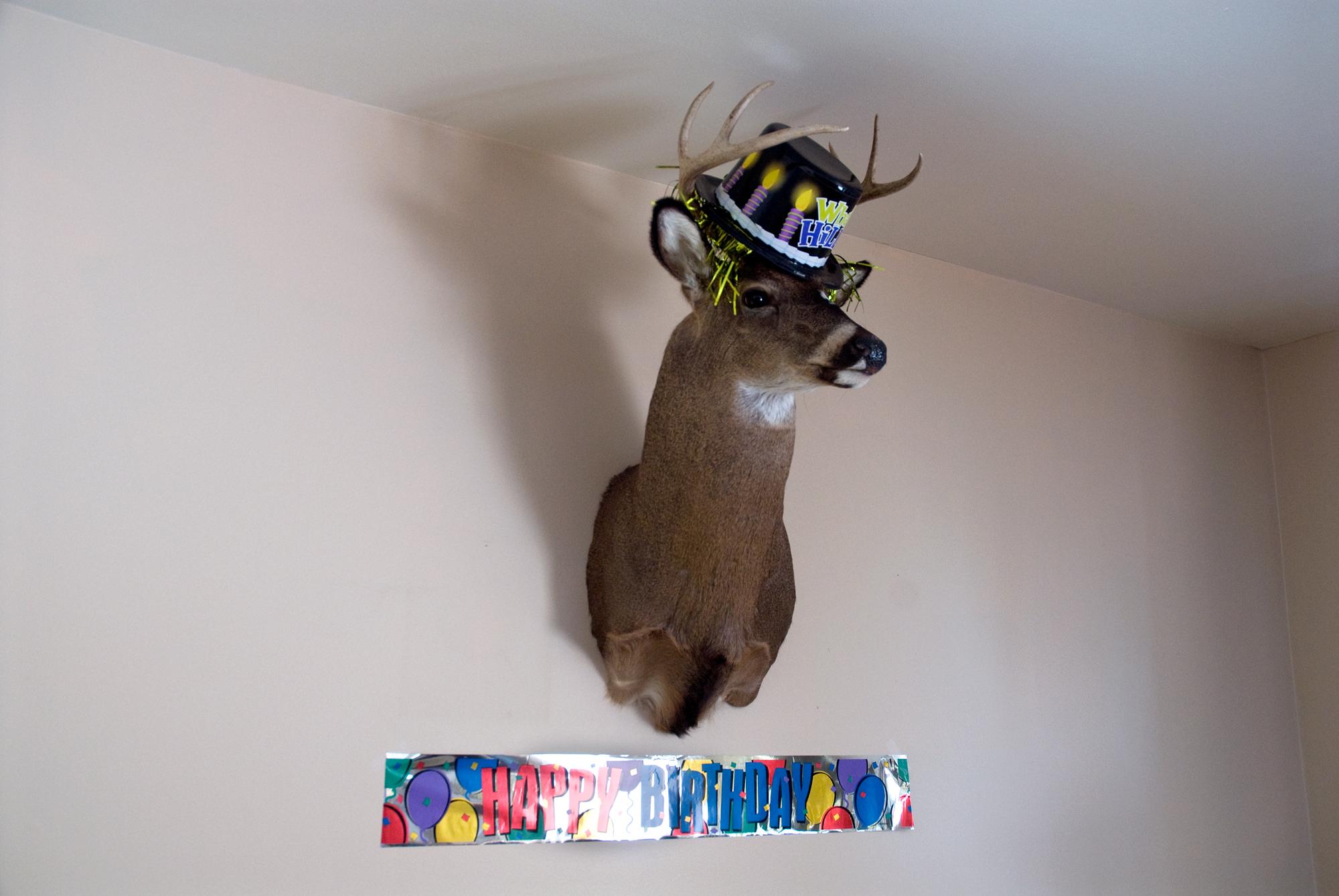 18_Deer